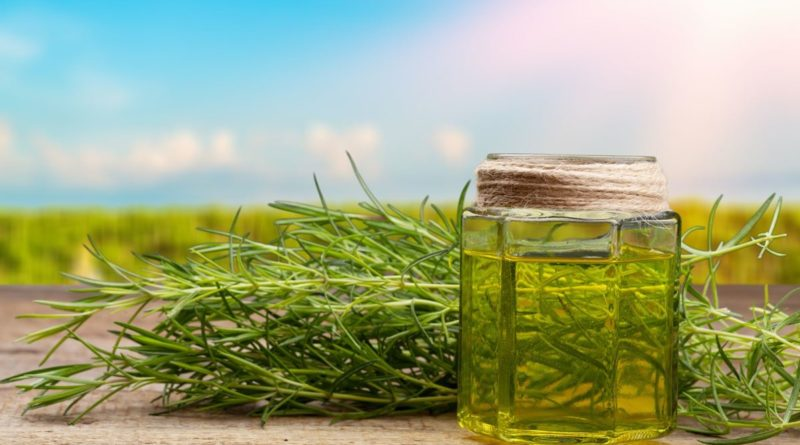 Jakie właściwości ma olejek CBD?